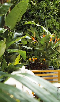 jardins-ambiance-deco