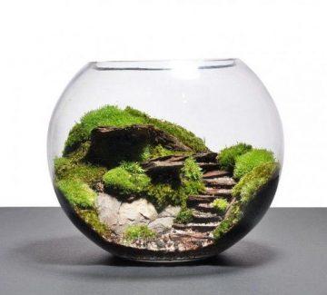Le terrarium