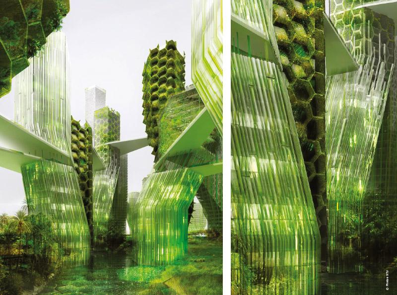 Cultiver des micro-algues sur les murs