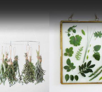 DIY fleurs séchées façon herbier