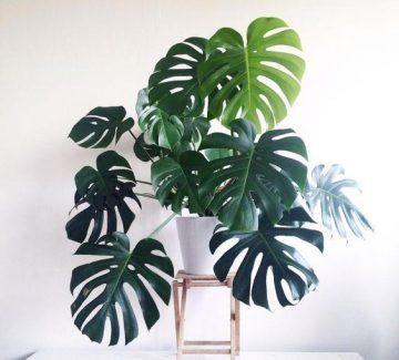 Ces belles plantes